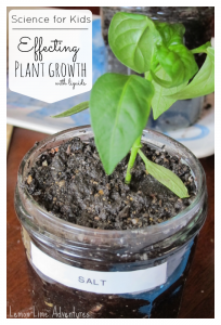 Experiments for Kids | Effecting Plant Growth