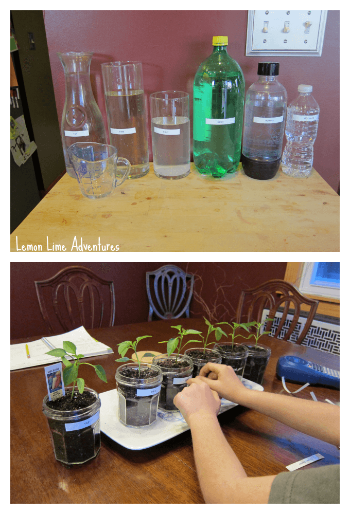 Plant Science Experiment Set up