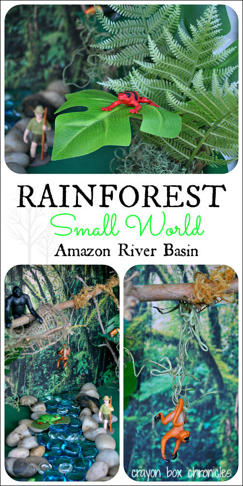 rainforest_cbc1