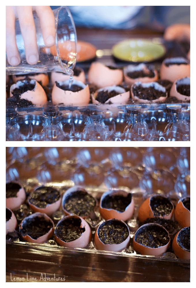 Planting Zinnias with Kids