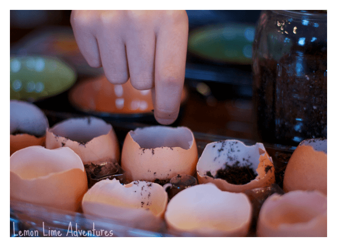 Planting seeds in Eggshells for Kids