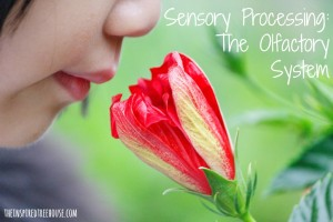 sensory processing the olfactory system