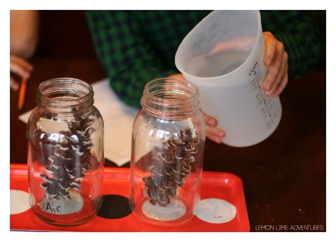 Pine Cone Experiment with Water