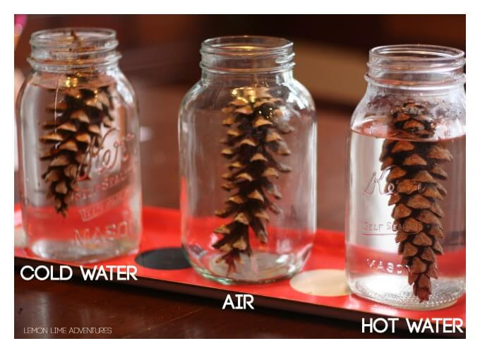 Pinecone Experiment for Kids