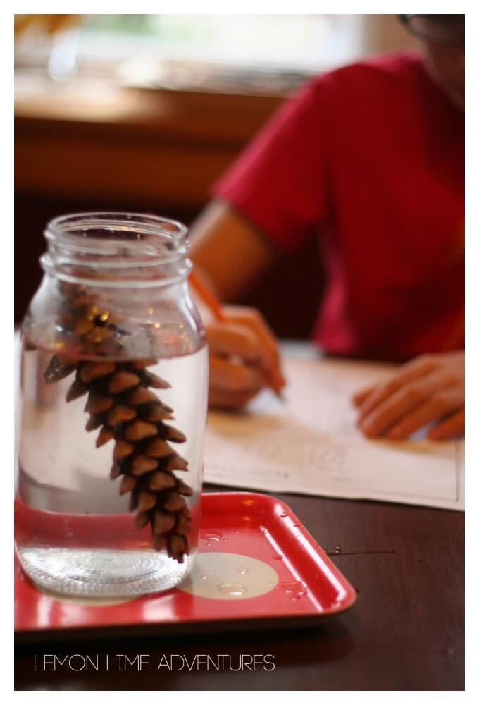 Why do Pinecones Open and Close