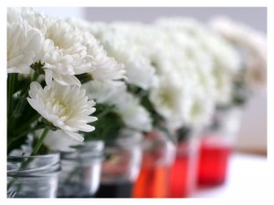 Simple Science for Kids | Color Changing Flowers