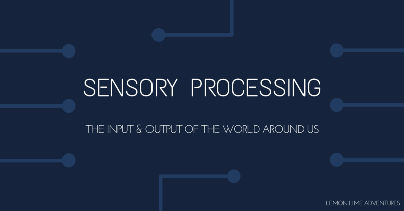 Sensory Processing Explained in Circuits