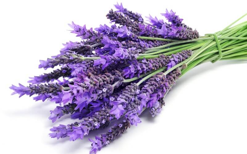 Lavender Natural Health for kids