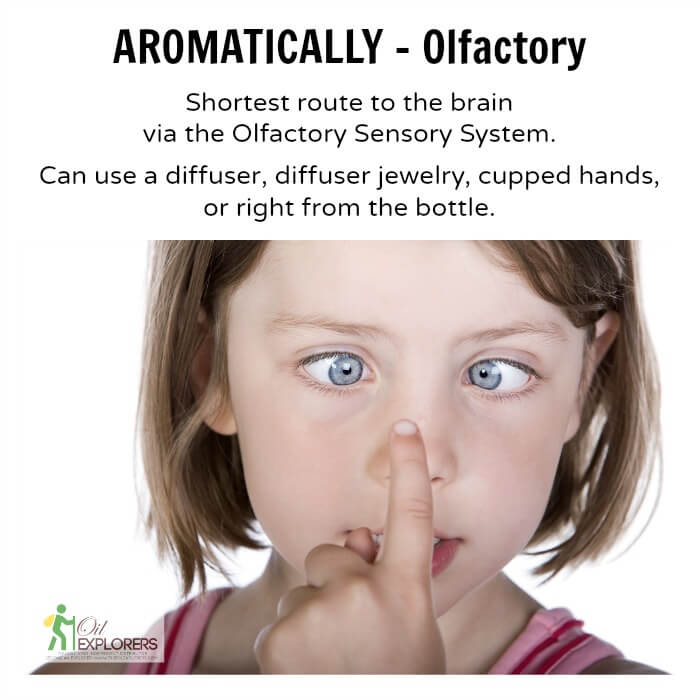 Aromatic_-_Olfactory_System