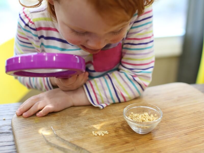 Exploring seeds with Toddlers Science