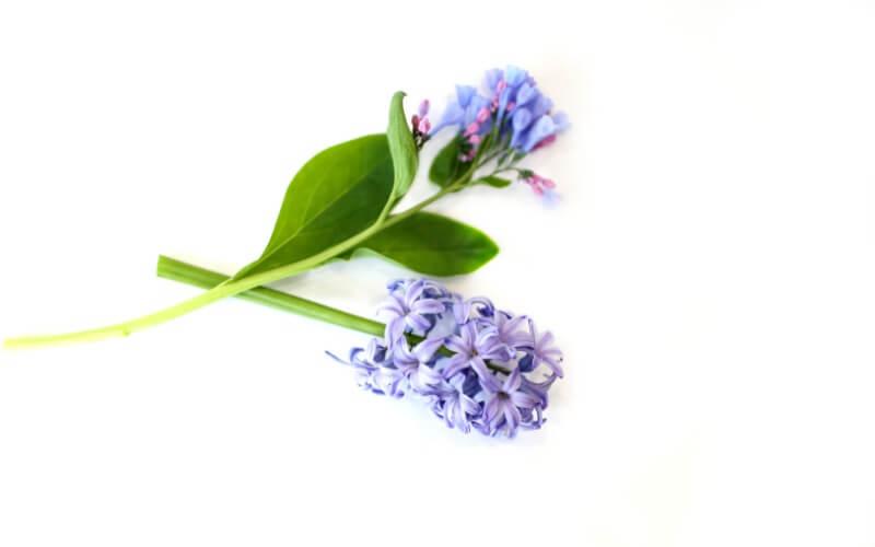 Natural Flower Sensory Bottles