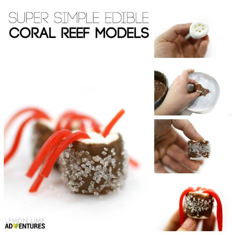 Simple Coral Reef Models for Kids