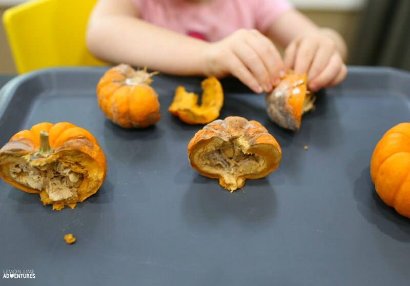 Dissecting Rotting Pumpkins with Kids