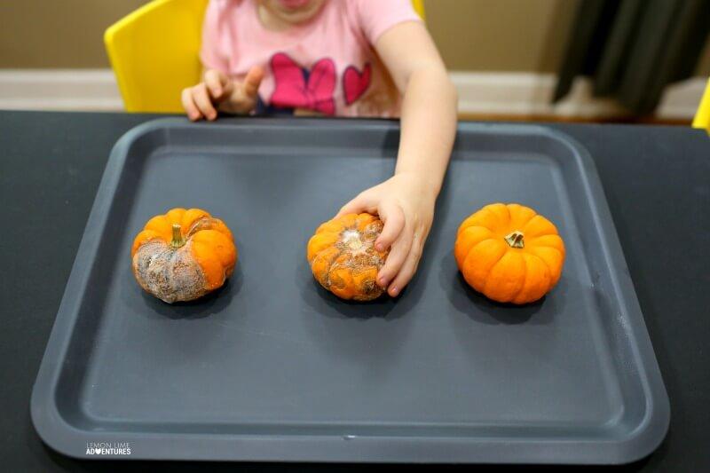 Pumpkin Science with Preschoolers