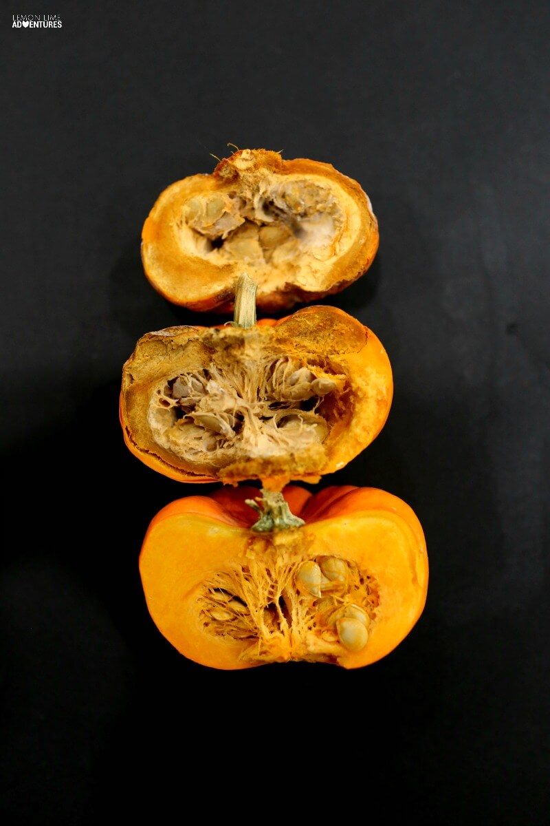 Rotting Pumpkin Experiments
