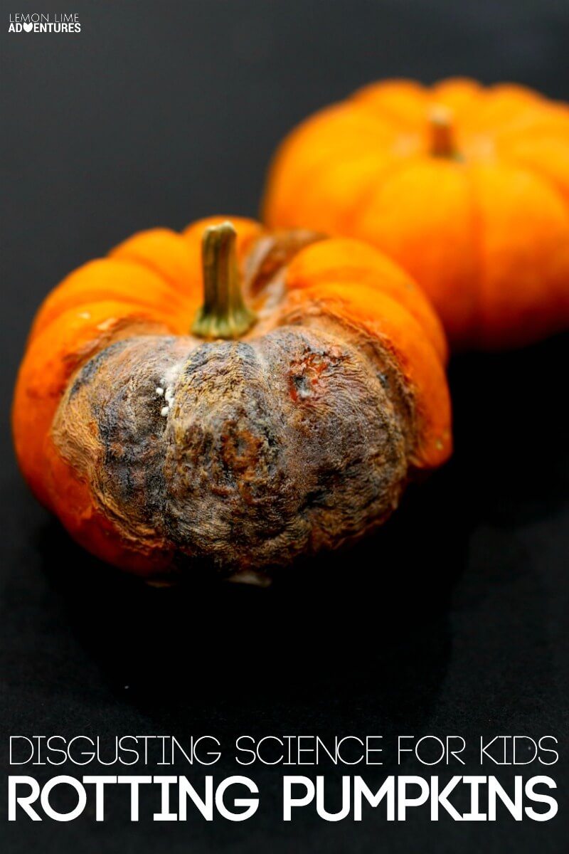 Rotting Pumpkin Science for Kids