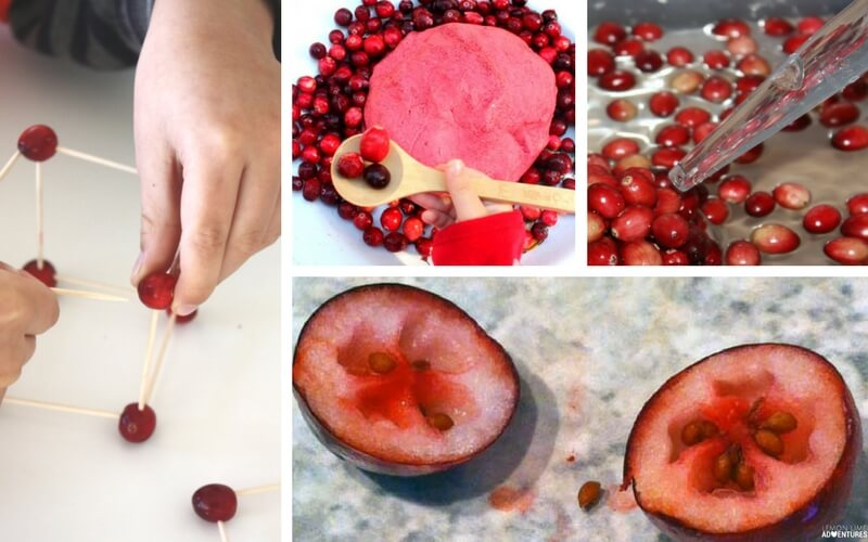 10 Absolute Must-Try Cranberry Science Experiments