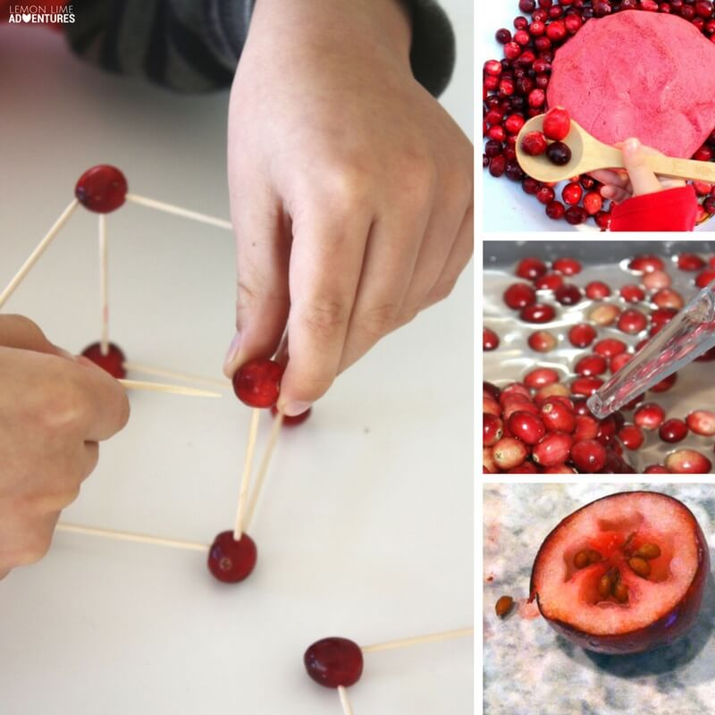 10 Must-Try Cranberry Experiments for Kids