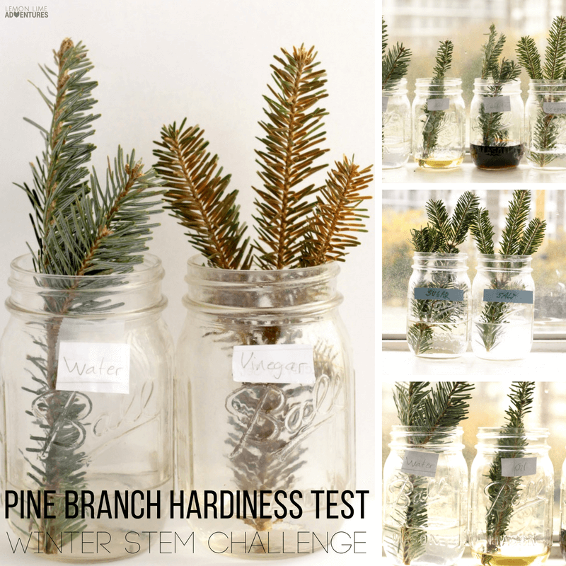 Kids will love learning about the hardiness of pine trees in this STEM activity. The pine branch hardiness experiment is the perfect after-Christmas event!