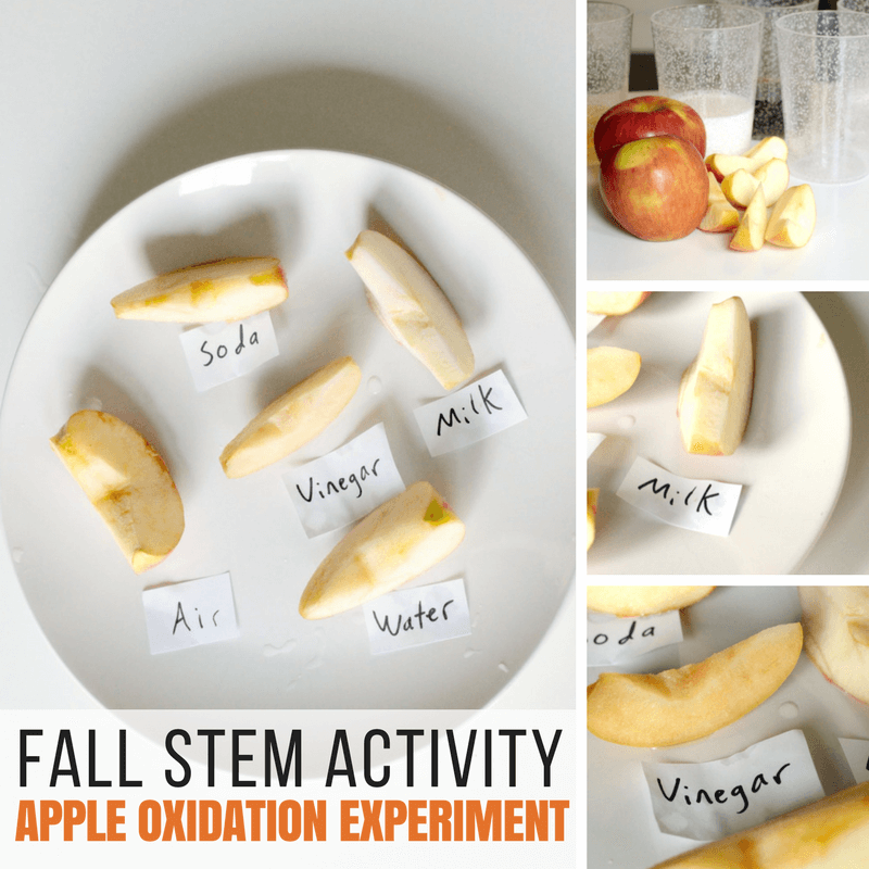 Fall STEM Activity: Preventing oxidation!