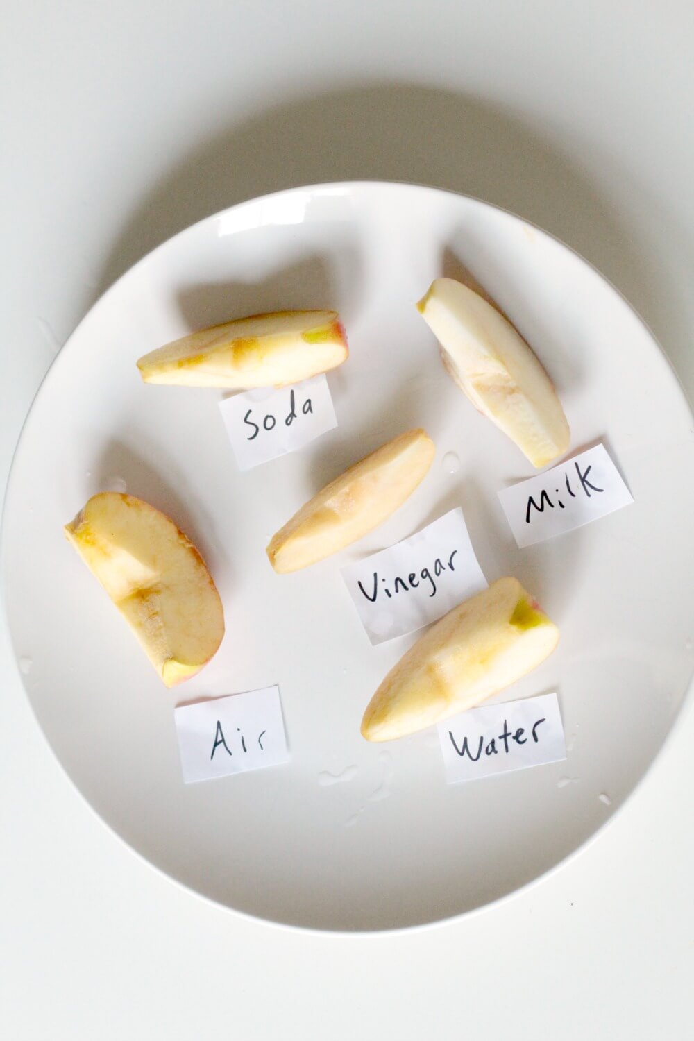 Fall STEM Activity: Preventing Apples from Oxidizing